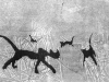 Les chats de St Nicolas A